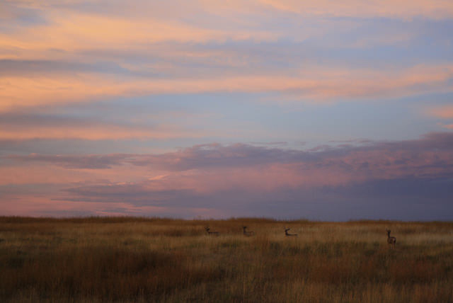 Mule deer at High Plains Homestead
