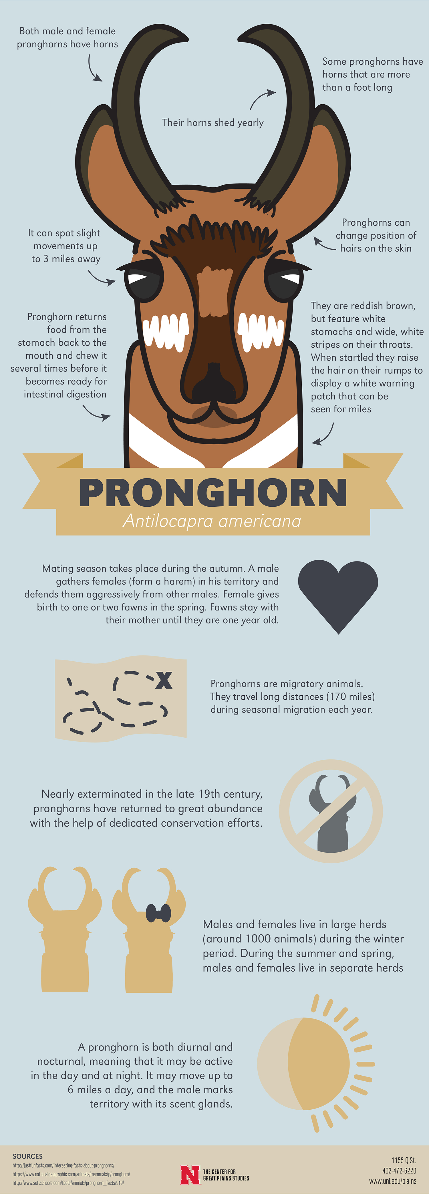 Pronghorn infographic
