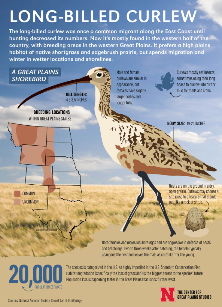 Curlew infographic